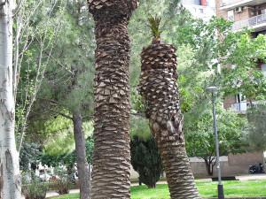 Пальмы в Испании «кромсают», как тополя в Челябинске