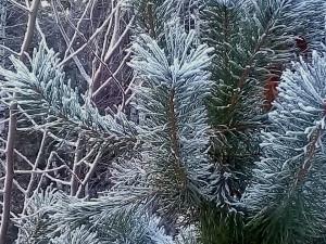 Непогода может испортить новогодние каникулы в Челябинской области: здесь ожидается приход сильного ветра
