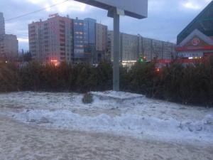 Непроданные ёлки захламляют улицы Челябинска