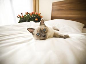 Почему не стоит выгонять кошку из постели?