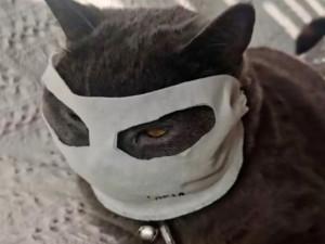 Кошки в масках на улицах Китая: что говорят ветеринары?