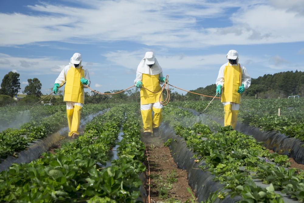Борьба с сорняком и снабжения питательными веществами почву и растения