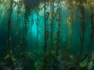 Уникальный подводный лес исследовали ученые