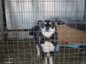 100 трупов собак и кошек обнаружили в Якутске