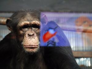 В депрессию начали впадать животные в зоопарках