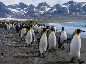 Аномальная жара в Антарктиде грозит планете стрессами