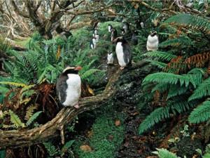 Древний тропический лес в Антарктиде оставил свои следы подо льдом (видео)