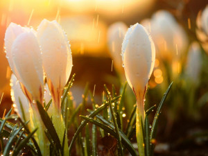 Потеплеет в пятницу, 10 апреля