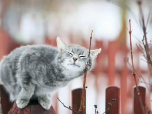 Резкое потепление до 26 градусов придет в Сибирь
