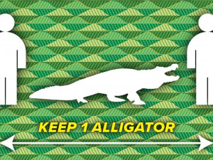 «Дистанция – не меньше одного аллигатора!»