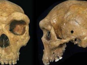 История происхождения человека снова меняется?