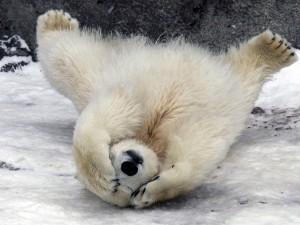 Почему магнитный Северный полюс «сбежал» из Канады в Сибирь, выяснили ученые