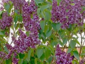 Последние майские дни в Челябинской области будут жаркими – до самого лета