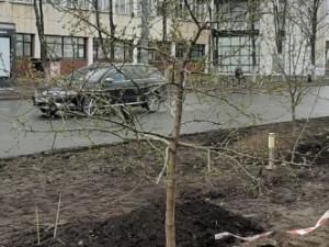 Яблони появятся на разделительной полосе в центре Челябинска