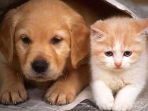 200 собак и кошек убили в пункте передержки в Якутии