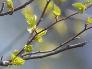 Резкое потепление ждут в Челябинской области. Первая жара
