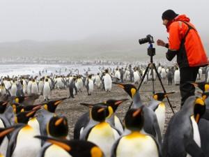 Веселящий газ от королевских пингвинов сводит исследователей с ума