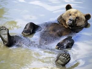 Гигантской медведице понравилась пенная ванна (видео)
