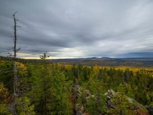 Здравствуй, лес. В Челябинской области отменили особый противопожарный режим