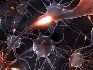 Процесс очистки мозга от мертвых нейронов сняли на видео (видео)