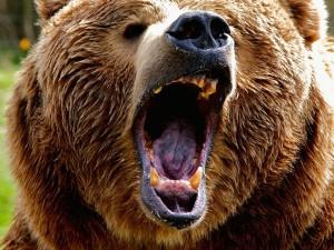Девушка отбилась от медведя ноутбуком