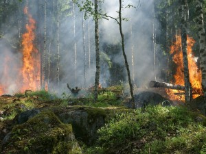 96 природных пожаров действует в Якутии