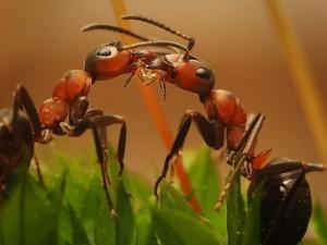 Чему могут научить нас муравьи во время пандемии