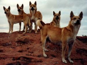 6300-летняя тайна взаимоотношений собаки и человека