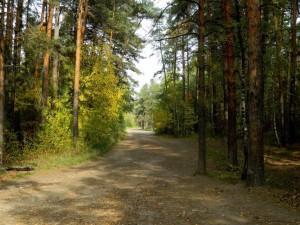 Опять горит сосновый бор в Челябинске