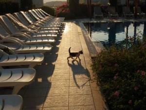 Цены на отдых в Турции могут взлететь почти на треть после открытия границ