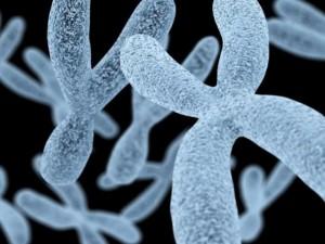 Начало новой эры в генетике: впервые расшифрована полностью Х-хромосома человека