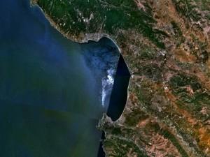 Рыб-невидимок встретили у берегов Калифорнии