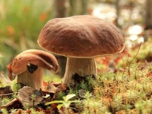 Мясников предупредил об опасности грибов