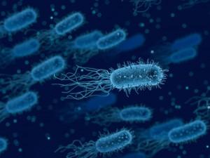 Умирающие бактерии предупреждают перед смертью своих собратьев
