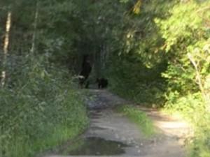 Семья медведей вышла к людям