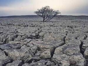 Время земледелия истекает: осталось 60 урожаев, говорят ученые