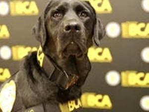 Полицейская собака находит электронные улики против убийц и педофилов