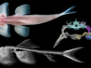 Какие рыбы «ходят» по суше?