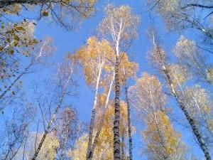 Резко похолодало в Челябинской области