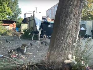 Стая бродячих собак напала на ребенка в Златоусте