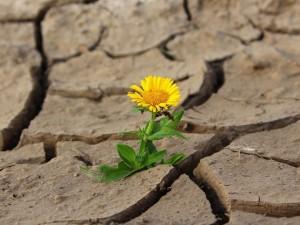 Катастрофическая 10-летняя засуха надвигается на Северную Америку