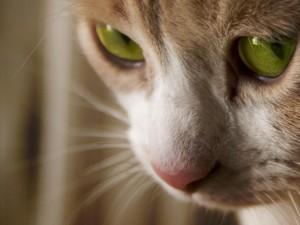 Иск за эксперименты над кошками подали на Департамент по делам ветеранов США