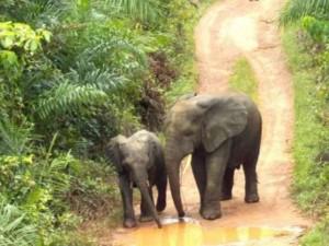 Два брата-слона идут пешком и без виз уже через третью границу