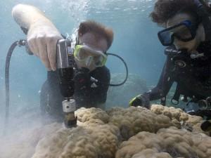 Мрачное будущее уже наступило, говорят морские биологи