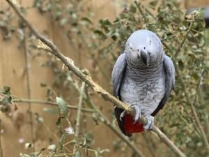 Пятерых сквернословов-попугаев пришлось развести по разным уголкам зоопарка