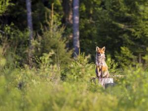 Новые правила охоты на территории России вступят в силу в 2021 году
