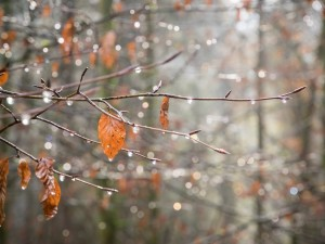Дождливо-снежная погода идет на Южный Урал