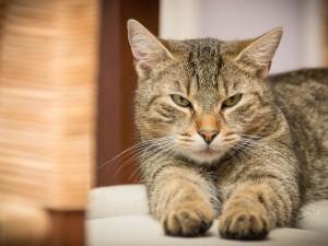 Как подружиться с любой кошкой, советуют психологи