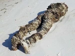 Жуткую находку вынес на пляж океанский прилив