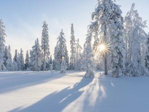 Настоящийхолод прогнозируют на Урале и в ряде регионов